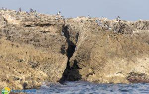 Viaggio sulle isole di Torre Guaceto, dove i colombi selvatici costruiscono nidi speciali