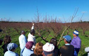 InPuglia organizza corso per Manutentore del Verde