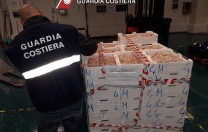 Confine illegale: la Guardia Costiera sequestra 550 Kg di gambero rosa
