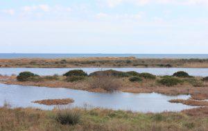 Moria di pesci al Parco Saline Punta della Contessa: tavolo tecnico al Comune