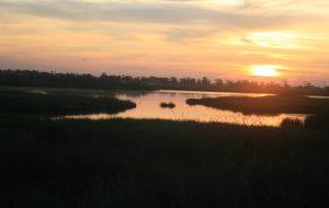Giornata mondiale dell'ambiente: Domenica 6 Legambiente nel Parco Saline Punta della Contessa