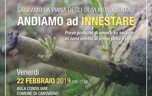 """Il 22 febbraio a Carovigno incontro divulgativo: """"Salviamo la Piana degli Olivi Monumentali, Andiamo a Innestare"""""""