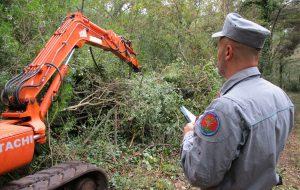 Azienda taglia abusivamente cento querce in un bosco: maximulta a proprietario