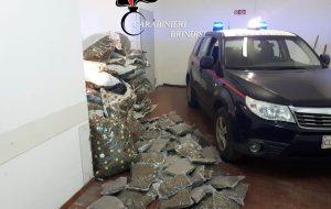 I Carabinieri scovano più di due quintali di marijuana: nei guai un'intera famiglia di Carovigno