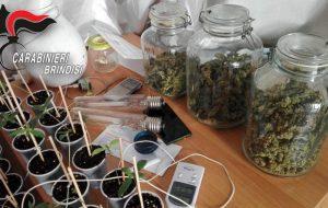 Coltiva 52 piante di marijuana nel bagno di casa: arrestato dai Carabinieri