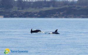 Torre Guaceto: la Riserva di pace nella quale i delfini vanno a dormire