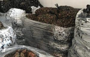 Sequestrate 3 tonnellate di molluschi nel porto di Brindisi