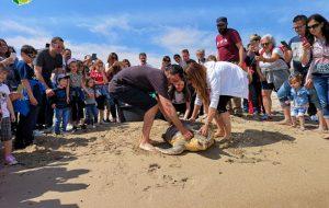 La storia della tartaruga Giorgia: quasi uccisa dalla pesca a strascico e salvata da una bambina