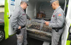 45 esemplari di uccelli protetti trasportati in furgone verso il Lazio: denunciate due persone