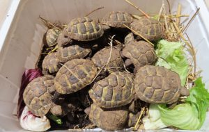 22 giovani tartarughe abbandonate al Rione San Paolo