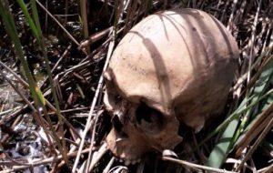 Mistero a Torre Guaceto: ritrovato un teschio