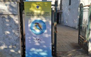 Venerdì 28 il 1° Family day al centro fauna selvatica della Provincia di Brindisi