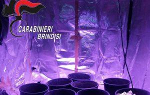 Botola segreta porta ad una coltivazione sotterranea di marijuana: arrestato 22enne di Pezze di Greco