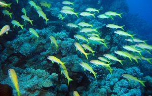 """All'Aeroporto di Brindisi la splendida mostra """"Nel mare dell'intimità. L'archeologia subacquea racconta il Salento"""""""