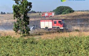 Legambiente su incendio nella Riserva naturale di Torre Guaceto