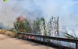 Incendio a Torre Guaceto: distrutta metà Macchia San Giovanni