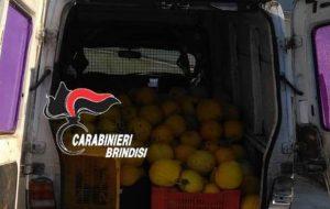Ruba sei quintali di meloni gialli da un'azienda agricola: arrestato 35enne