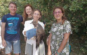 Il Centro Fauna selvatica della Provincia di Brindisi libera una Poiana