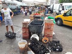 120 Kg di cozze sequestrate al mercato: nessuna indicazione sulla provenienza