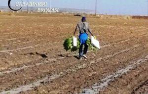 Lavoratore del Mali nei campi senza assunzione: denunciato imprenditore agricolo, rischia la sospensione della licenza