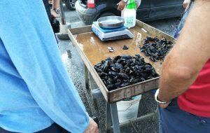 Sequestrati 25 Kg di cozze nere vendute in piazza: non avevano i requisiti igienico-sanitari per essere portate a tavola