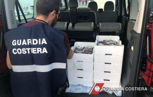 La Capitaneria di Porto sequestra tre quintali di pesce