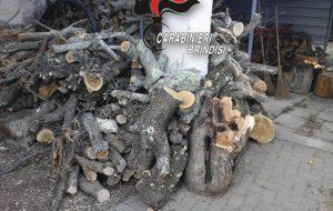 Recide ulivo secolare per rubare 10 quintali di legna: denunciato dai Carabinieri