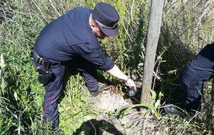 Bracconiere con richiami acustici denunciato dai Carabinieri Forestali