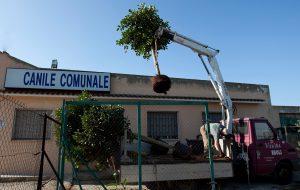 Avviata la piantumazione di 11 alberi nelle aree di sgambamento del Canile Comunale di Brindisi,