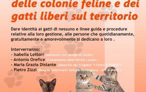 Venerdì 18 a Palazzo Nervegna convegno sulle colonie feline