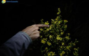 Torre Guaceto e le falene: scoperte specie a rischio di estinzione