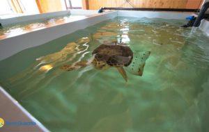 Il WWF Brindisi sostiene il Centro tartarughe di Torre Guaceto: in dono la strumentazione