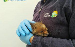 Torre Guaceto lancia la campagna di crowdfunding: a Natale regala un'adozione selvaggia