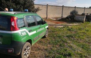 Frantoi irregolari: sequestri dei Carabinieri Forestali a Villa Castelli ed Erchie