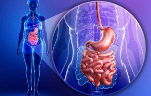 Come il cibo viene trasformato nel nostro intestino?  Di Rocco Palmisano