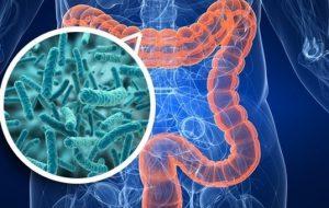 I batteri intestinali sono alla base della nostra salute e della stessa nostra vita. Di Rocco Palmisano