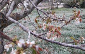 Gelata del 25 marzo: il Comune di Brindisi chiede riconoscimento stato di calamità