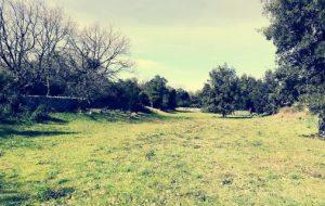 Riqualificazione di Parco Augelluzzi: progetto approvato e candidato al bando del Gal Alto Salento