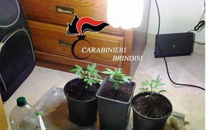 Allestisce in casa due mini serre per la coltivazione di marijuana e per evitare la perquisizione oppone resistenza, arrestato