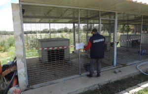 Canile abusivo a Brindisi: intervengono i Carabinieri Forestali
