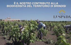 Giornata mondiale della biodiversità: l'impegno di Tenute Lu Spada