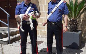 Abbandona un cucciolo lanciandolo dal finestrino dell'auto: i Carabinieri recuperano il cane e denunciano l'uomo