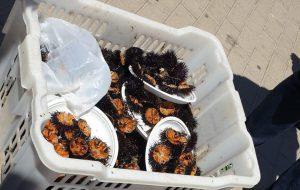 La Guardia Costiera intensifica i controlli: sequestrate nove tonnellate di prodotto ittico e inflitte sanzioni per € 71.000