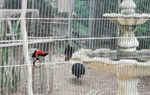 Catturavano uccelli dall'oasi protetta e li rivendevano: arrestati padre e figlia