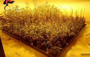 Allestisce due serre per la coltivazione di marijuana: arrestato
