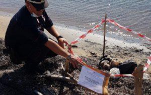 Pacco di carne avariata sulla spiaggia di Punta Torre Cavallo: due ragazzi accusano malore