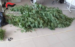 Marijuana: arresti ad Oria e Mesagne