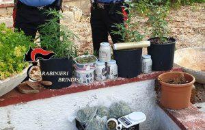 Conviventi coltivano e detengono occultati presso l'abitazione rurale marjuana: arrestati