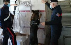 Il cane antidroga fiuta 1,5 Kg di hashish suddiviso in 15 panetti: arrestato 32enne