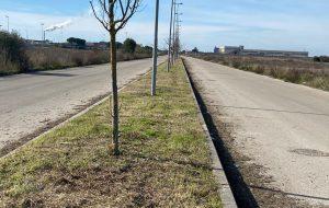 In corso lavori di manutenzione del verde nella zona PIP di Francavilla Fontana